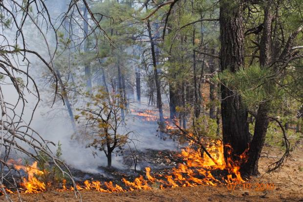 Forest floor at the juniper fire in arizona photo courtesy u s forest