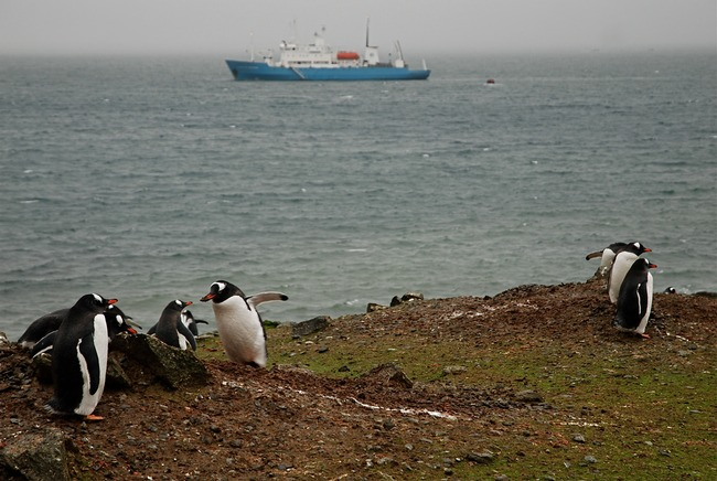 Gentoo penguins and the S/V Professor Molchanov at sea.