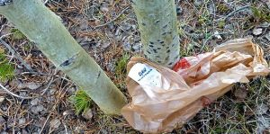 Do you know where your plastic shopping bag ends up?