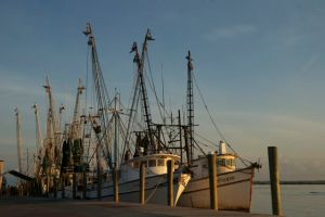 Shrimp boats moored along Apalachicola Bay, Florida.