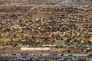Industrial feedlots are huge sources of greenhouse gases. PHOTO COURTESY DAVIS CREEK FARMS.