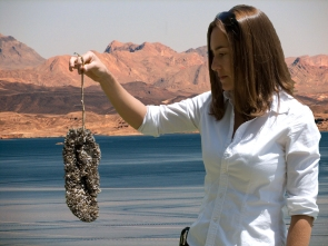 Quagga mussels coating a flip-flop in Lake Mead. PHOTO COURTESY NATIONAL PARK SERVICE.