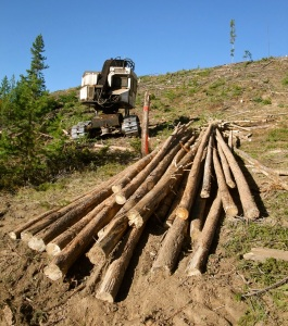 Logging on the Frisco Peninsula, Sept. 2011. @bberwyn photo.