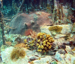 A diverse coral reef in the U.S. Virgin Islands. PHOTO BY CAROLINE ROGERS/USGS.