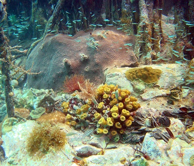 USGS coral reefs
