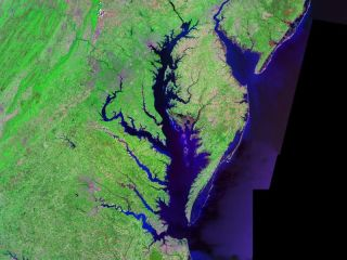 Chesapeake Bay in a Landsat photo.