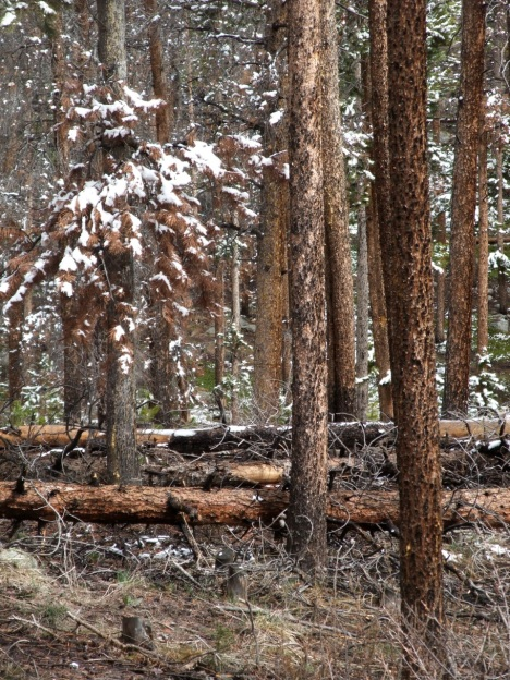 Logging crews are making progress clearing dead trees from Summit County.