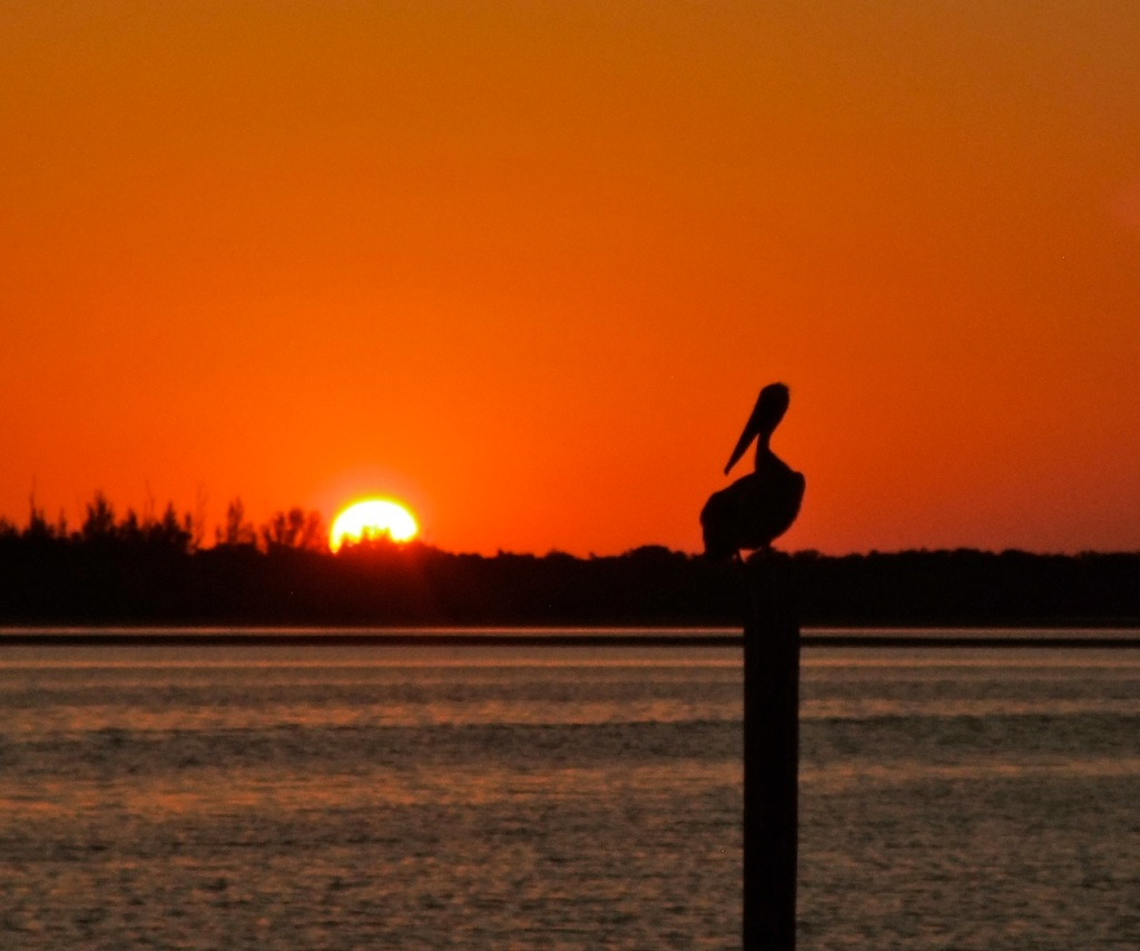A pelican strikes a classic pose during a Florida sunset.