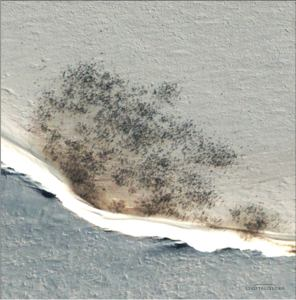 Emperor penguin colony near Halley Bay. IMAGE COURTESY DIGITALGLOBE.
