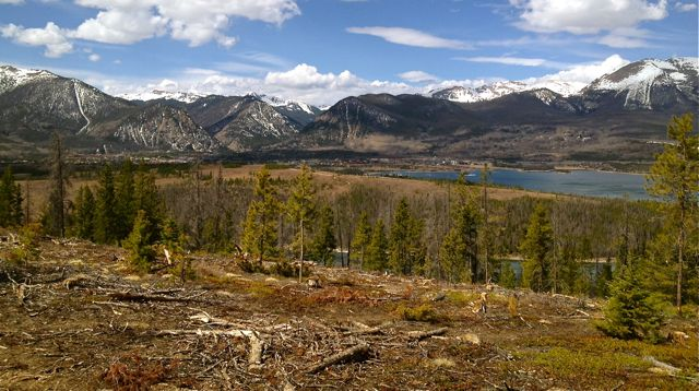 Forest biomass questioned as fuel source.
