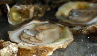Love oysters? Then you should be worried about global warming.