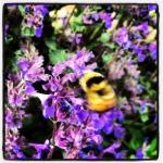 Bumblebee dance.