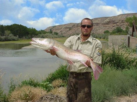 U. S. Fish and Wildlife Service biological technician Rick Smaniotto captured this endangered Colorado pikeminnow in a fish passage at the Redlands Water and Power Company Diversion Dam on the Gunnison River near Grand Junction, Colo., on July 3, 2002. The fish weighed 16.8 pounds and measured 37 inches. After collecting research data, the fish was tagged and returned to the river. PHOTO COURTESY USFWS.