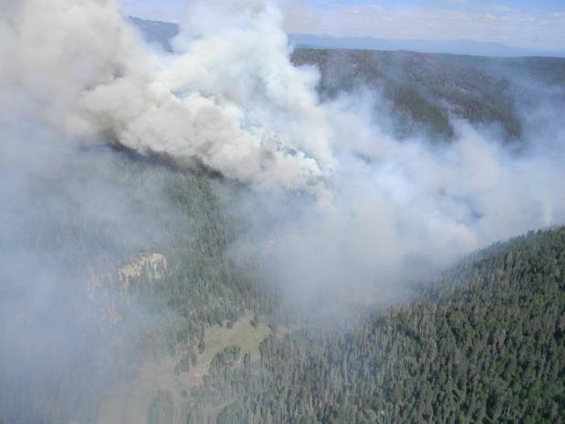The Little Sand Fire burns through pine forest near Pagosa Springs. PHOTO COURTESY USFS.