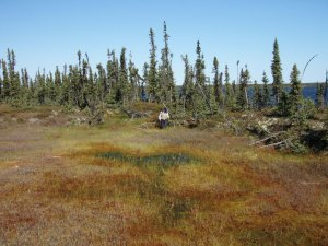 USGS researchers make ground-based permafrost measurements in Alaska.
