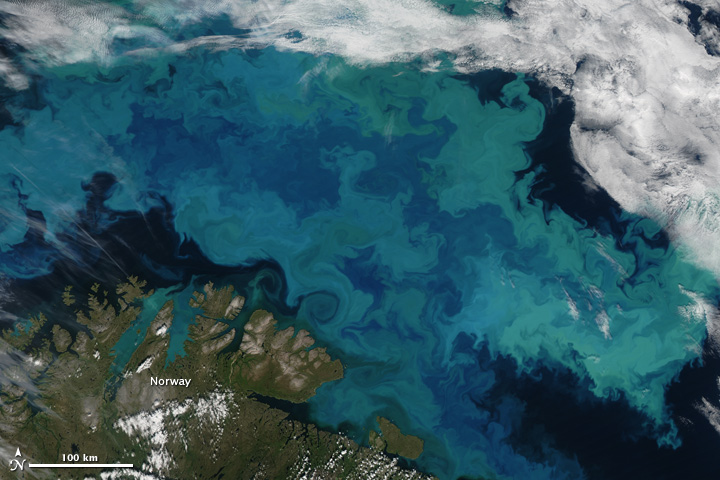 A plankton bloom in the Arctic waters of the Barents Sea. Photo courtesy NASA.