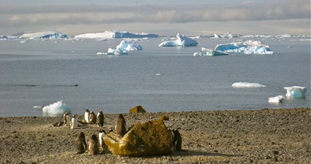 Increasing concentrations of CO2 could turn this Antarctic beach into a tropical zone. Photo by Bob Berwyn.