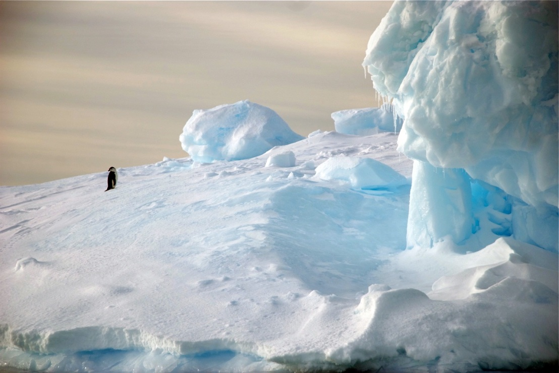 Antarctic biodiversity is at risk from climate change. Photo by Bob Berwyn.