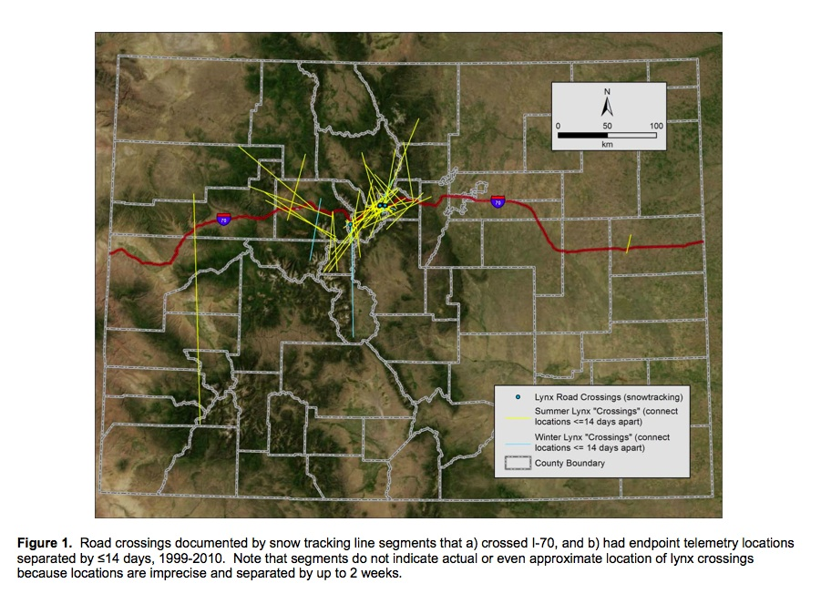 Due to the poor precision of telemetry location estimates and the amount of time elapsed between locations, the straight line movement paths depicted in this analysis DO NOT represent exact or even approximate locations where lynx crossed I-70.