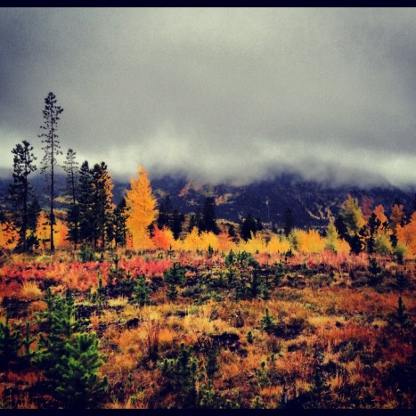 A rainy morning brought out some fall colors on the Frisco Peninsula.
