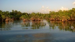 Coastal mangrove ecosystems are incredibly important as marine nurseries and as carbon sinks, but they are under threat from coastal development.