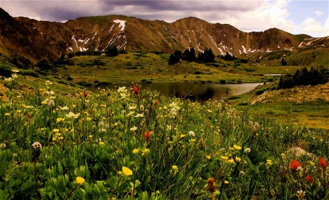 In alpine tundra regions, scientists have already document how plants and pollinators are out-of-synch with each other because of global warming.