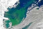 A NASA satellite image from January 2011 shows a summer bloom of algae in the Ross Sea. Click on the image to learn more.