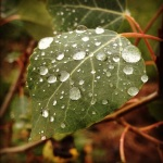 An aspen leaf moistened by monsoon rain.