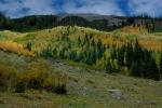 Aspen groves glow on the slopes above Snowmass Creek beside the switchbacks that ascend to Snowmass Lake.