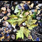 Old leaves, remnants of summer.