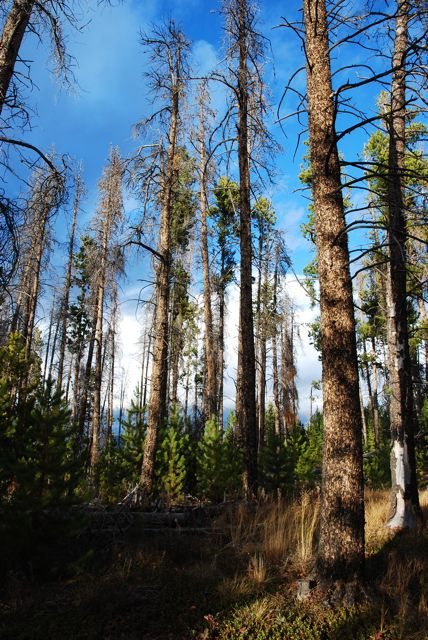 Researchers try to pinpoint impacts of ozone on forest ecosystems.