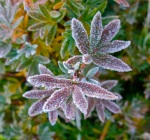 Frost has been on the ground for several days now, and with some cooler temps in the forecast, there should be some lovely formations in areas where there's a little moisture available.