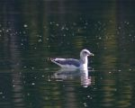 A gull enjoys morning sunshine on Dillon Reservoir.