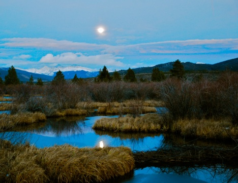 Another fun wetlands shot, but the moon disappeared in a fuzzy halo.
