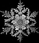 Of course, that didn't show the same dedication displayed by Wilson Bentley, a Vermont resident, who spent several years of his life perfecting the art of photographing individual snow crystals in the late 1800s. Click on the image to read about Bentley and to see more of his stunning pics.