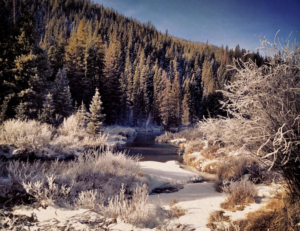 Frost along the Snake River.