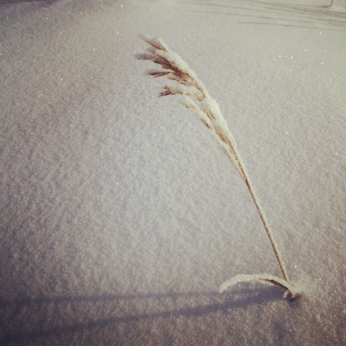 Winter grass.