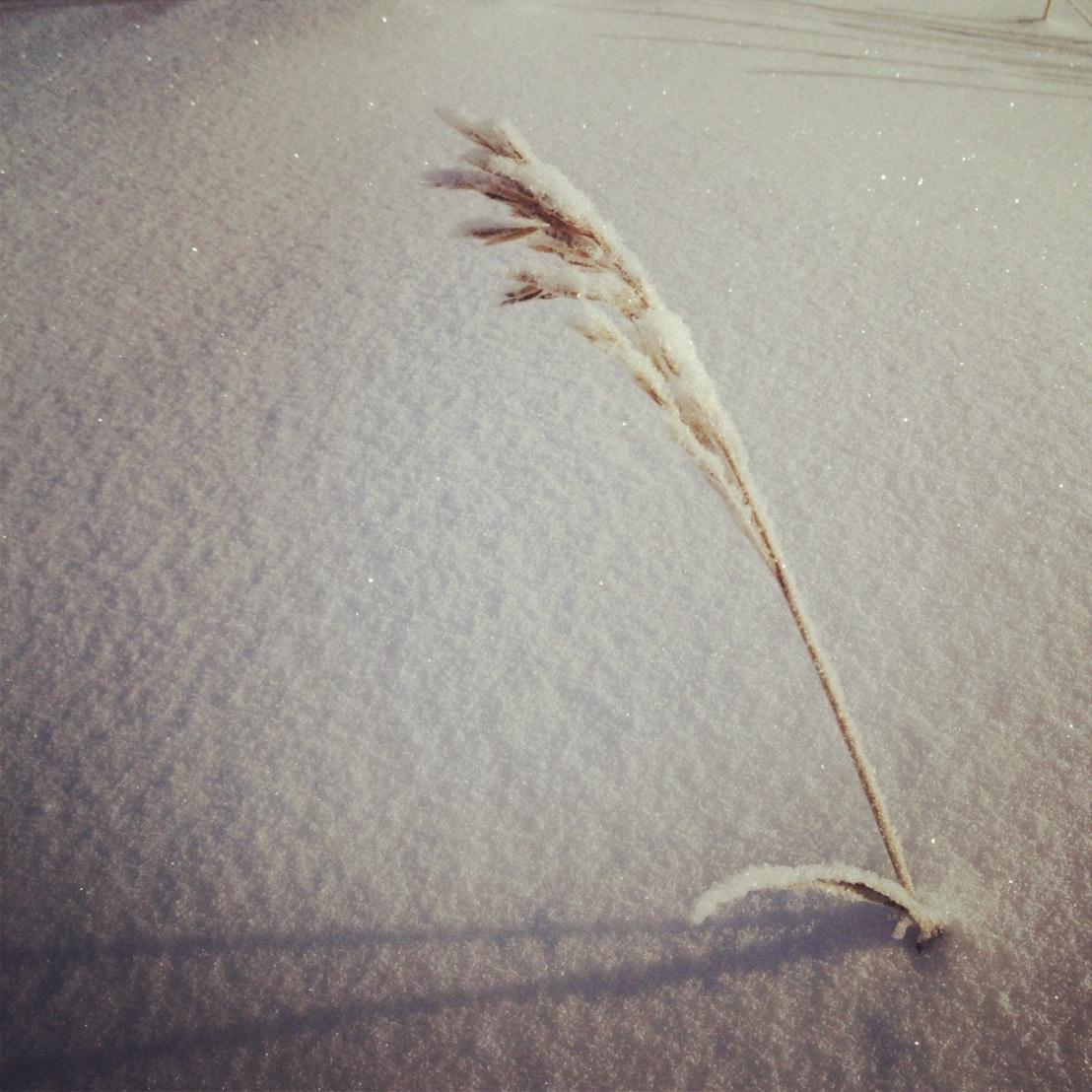 Winter grass.