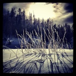 Winter grass II.