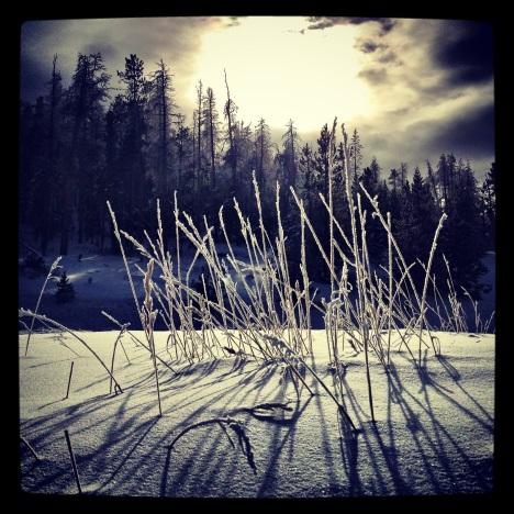 Winter grass II.