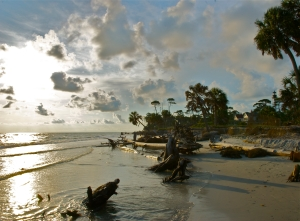 Northern Gulf of Mexico beaches will get some TLC this coming summer as part of the ongoing restoration work in response to the Deepwater Horizon oil disaster.