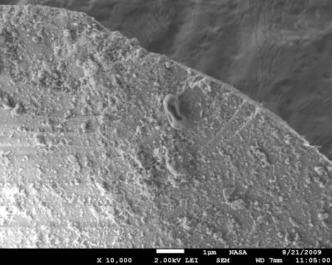 Scanning electron microscopy reveals a raisin-shaped bacterial spore atop a grain of dust that journeyed from Asia high in the troposphere to the West Coast and was detected by an observatory in central Oregon.