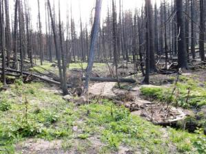 Recovery in an area burned by the Waldo Canyon Fire, near Colorado Springs, Photo courtesy PSICC.
