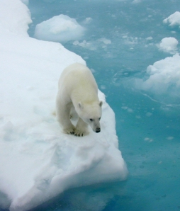 Credit: Dr. Kathy Crane, NOAA Arctic Research Office