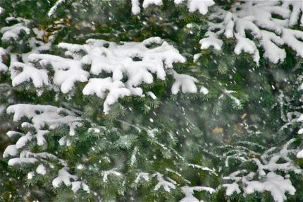 Less snow, more rain predicted for northeastern U.S. Bob Berwyn photo.