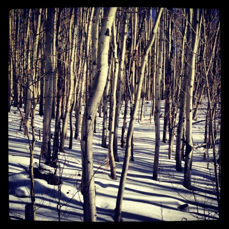 Gotta love the white-on-white of a snowy aspen grove.