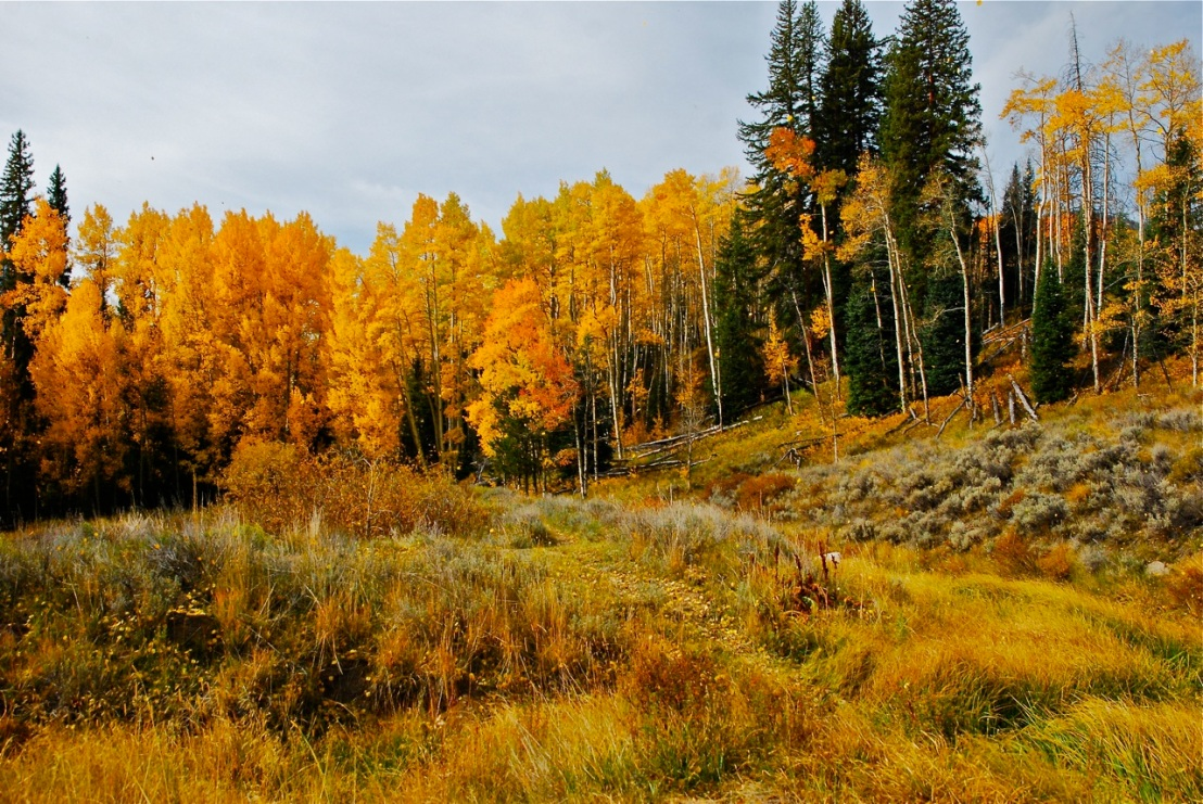 A classic autumn scene in the Colorado high country.