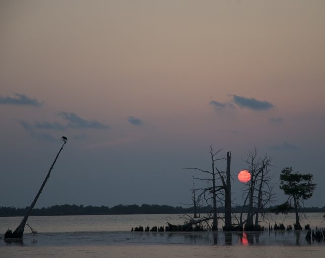 A roadside view of a bayou sunset in Venice, Louisiana.