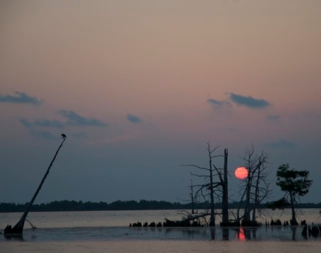 A roadside view of a bayou sunset in Venice, Louisiana.