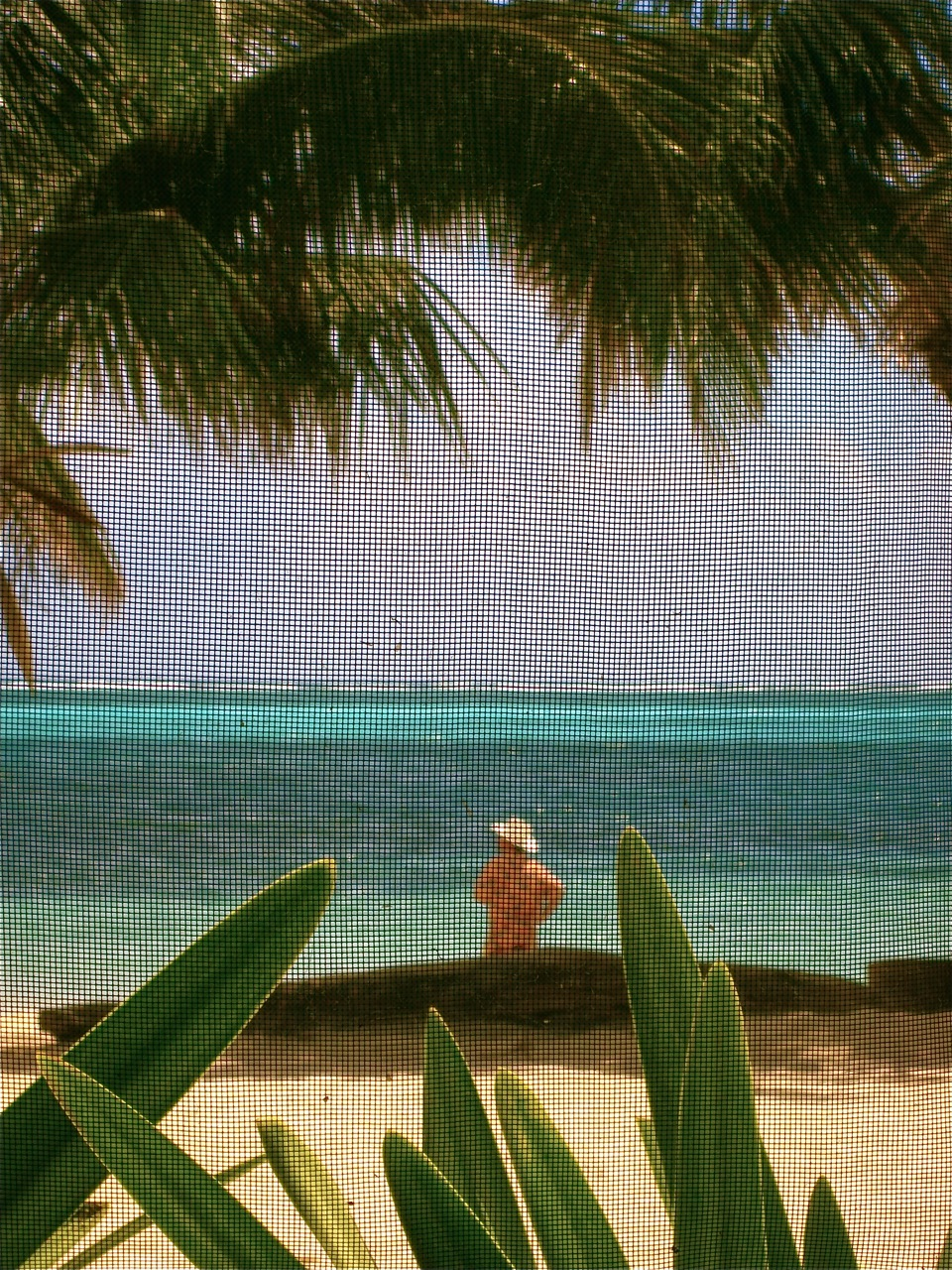 A view of the Caye Caulker beach through a screened window.